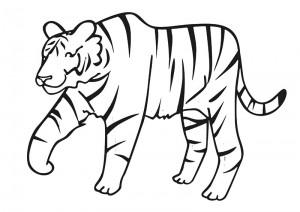 Hayvanlar Boyama Sayfalari Okul Oncesi En Guzel Boyamalar