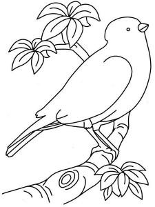 kuş_boyuyorum