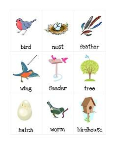 kuşlar_ingilizce_kelimelr