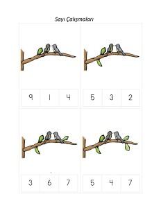kuşlar_sayı_çalışmaları