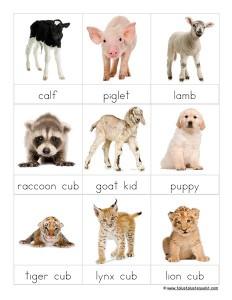 minik_hayvanlar