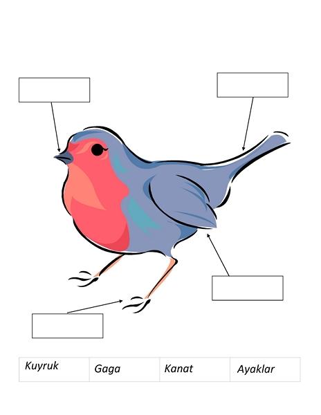 Kuş Konulu Etkinlik Sayfaları Evimin Altın Topu