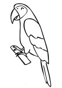 papağan_boyama
