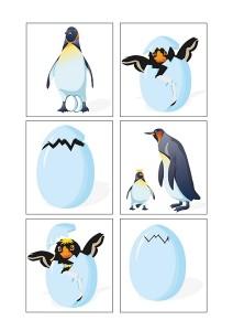 penguen_evreleri