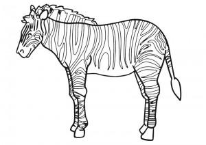 Best Of Zebra Boyama Sayfasy On Bahattinteymuriom