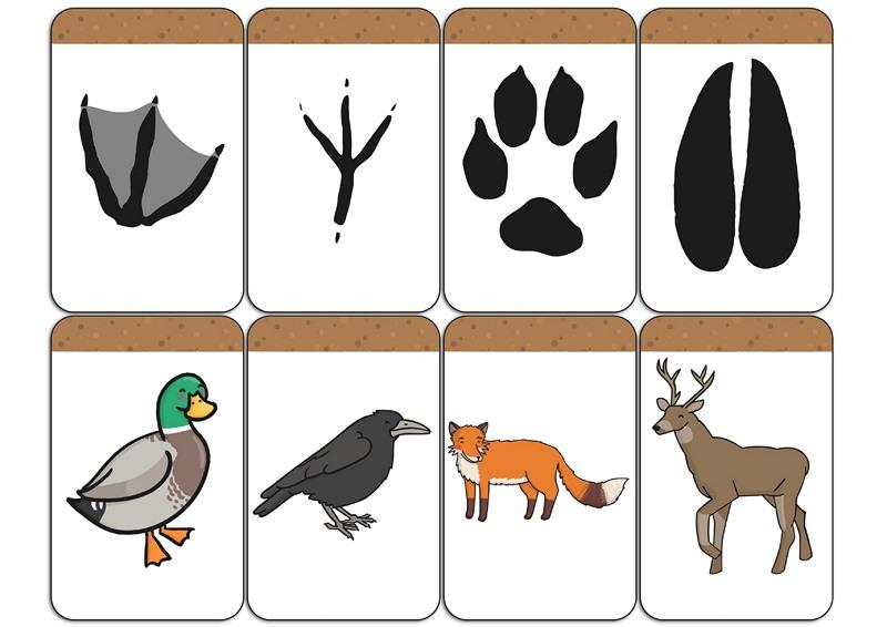 Hayvan Ayak Izleri Hayvanlari Ayaklarindan Tanima