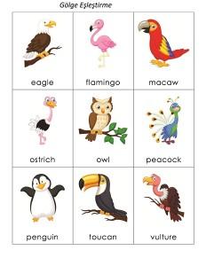 kuşlar_ingilizce_kartlar