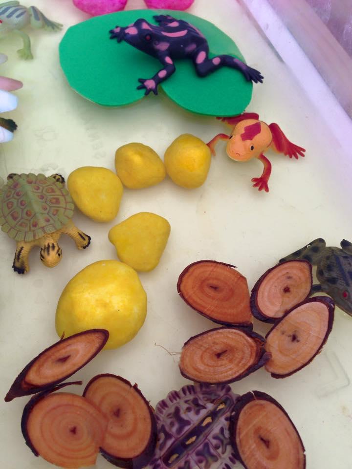 kurbağa duyusalı