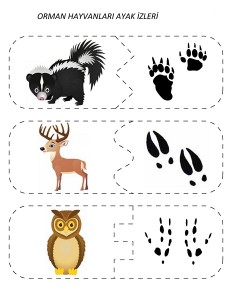 okul öncesi orman hayvanları