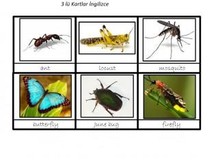 okul_öncesi_ingilizce_böcekler