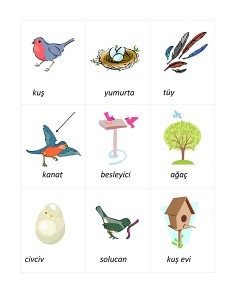 okul_öncesi_kuş_