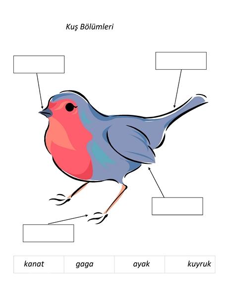 Photo of Kuş Etkinlikleri