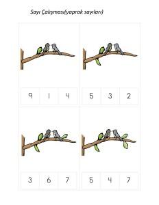okul_öncesi_kuş_sayı