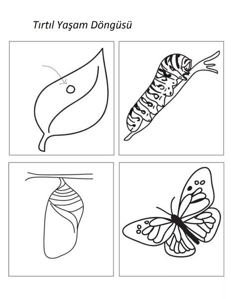 Indir Kelebeğin Oluşumu Boyama Yazdırılabilir Boyama Sayfaları