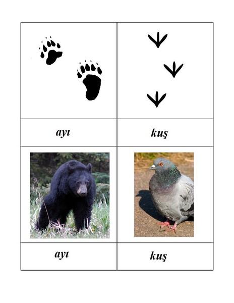 hayvan_ayak_izleri