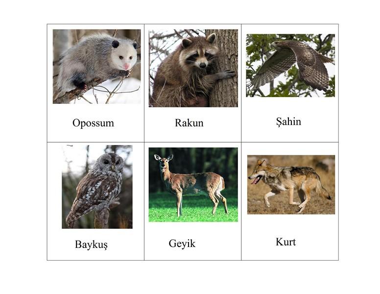 hayvan_kartları