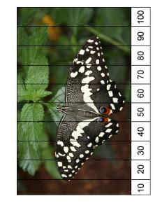 okul_öncesi_kelebek_sayı_puzzle