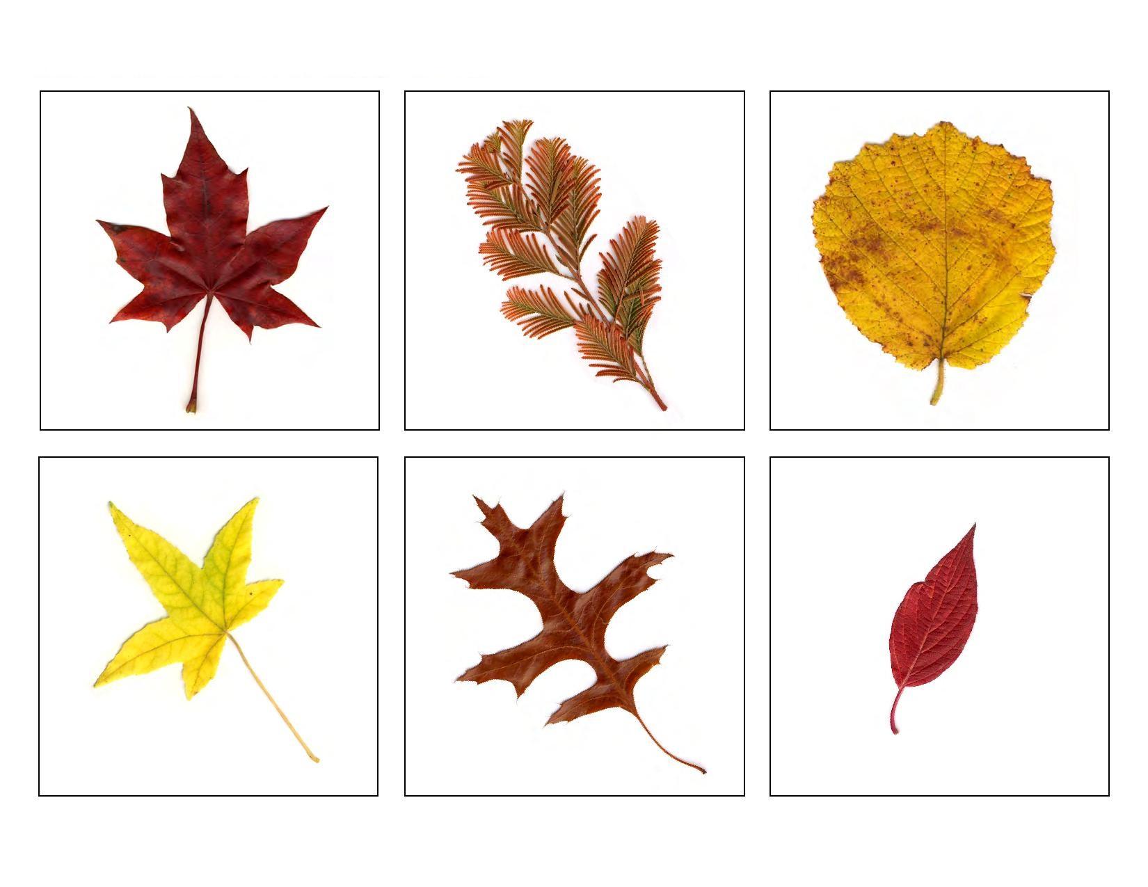 Photo of Sonbahar Yaprakları Hafıza Oyunu