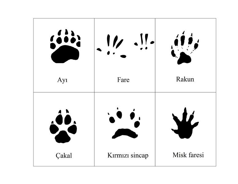 orman_hayvanları_ayak_izleri