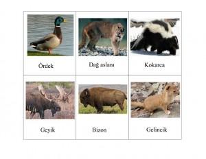 orman_hayvanları_eşelştirme_kartları