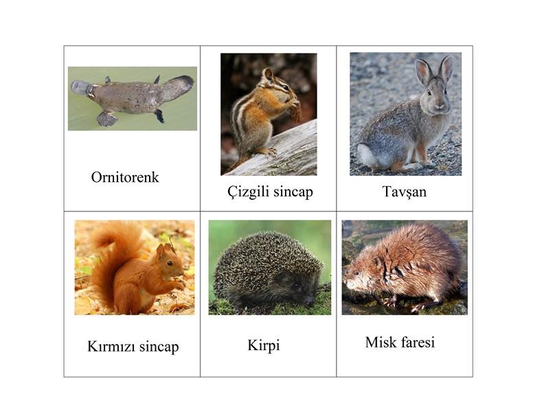 orman_hayvanları_kartları