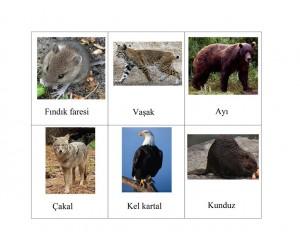 orman_hayvanları_resimleri