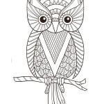 Ayrıntılı Baykuş Boyama Sayfaları Arşivleri Evimin Altın Topu