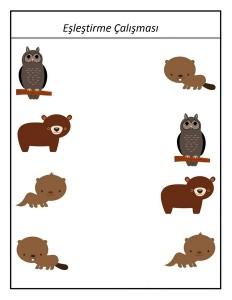 anasınıfı_hayvanlar
