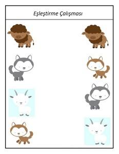 hayvanlar_harika