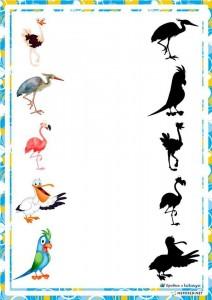 okulk_öncesi _gölge_eşleştirme_kuşlar