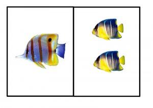okyanus_hayvanları_sayı_balıklar
