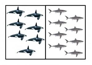 okyanus_hayvanları_sayı_ilginç