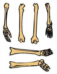 iskeleti öğreniyorum