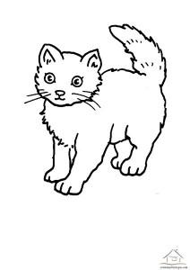 kedi boyama çalışmaları