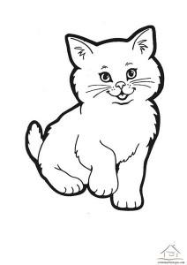 kedi boyama örnekleri