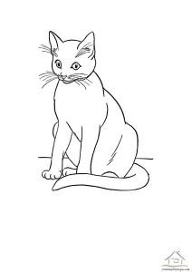 kedi boyama etkinliği