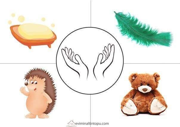 Duyu Organlarımız Etkinliği Fen Ve Doğa Etkinlikleri Evimin Altın Topu