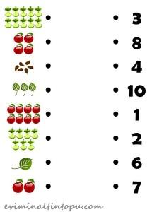 elma ile tane hesabı etkinlikleri (1)