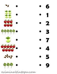 elma ile tane hesabı etkinlikleri (2)