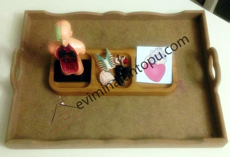 okul öncesi organlarımız eşleştirme kartları (1)