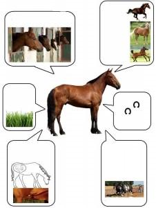 çıktı alınabilir hayvan bilgi kartları