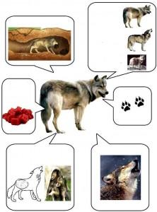 okul öncesi hayvanlar bilgi kartları