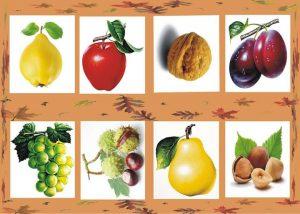 meyve-golge-eslesirme1
