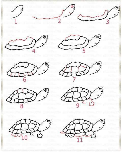 Adım Adım Hayvan çizimleri En Kolay Hayvan çizimleri Evimin Altın Topu