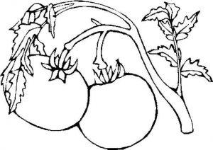 eglenceli-sebze-kartlari-ve-boyama-sayfalari-53