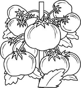 eglenceli-sebze-kartlari-ve-boyama-sayfalari-54