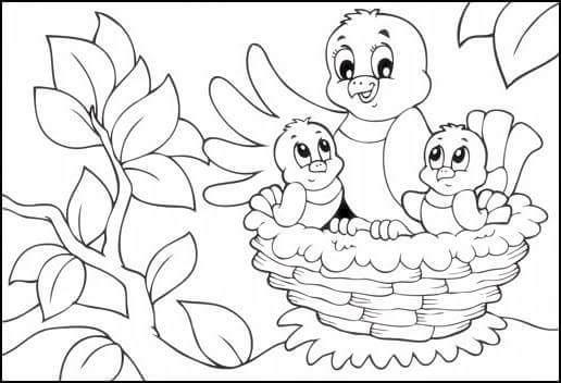 Kuş Resmi Boyama Sayfası