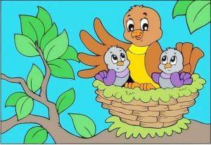 kuş yuvası resmi