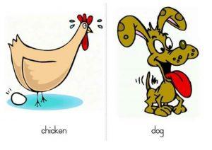 tavuk köpek ingilizce kartı