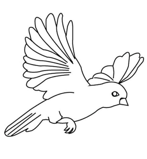 Kuş Boyama Okul öncesi Gazetesujin